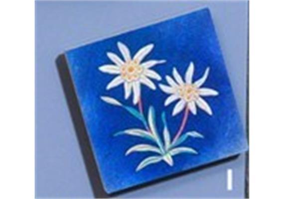 Atelier Fischer 6900I Magnet Edelweiss