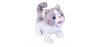 Chi Chi Love - Little Cat