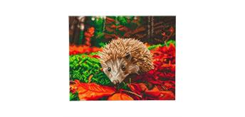 "Crystal Art Kit ""Hedgehog"" 40 x 50 cm, mit Rahmen"