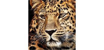 Diamond Painting Jaguar Kopf 40 x 30 cm