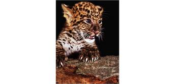 Diamond Painting Set Q324 Leopard Cub 20 x 30 cm