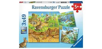 Ravensburger Puzzle 08050 Tiere in ihren Lebensräumen