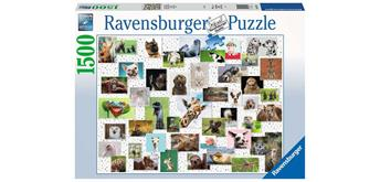 Ravensburger Puzzle 16711 - Funny Animals Collage