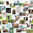 Ravensburger Puzzle 16711 - Funny Animals Collage | Bild 2