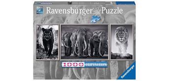 Ravensburger Puzzle 16729 Panter, Elefanten, Löwe